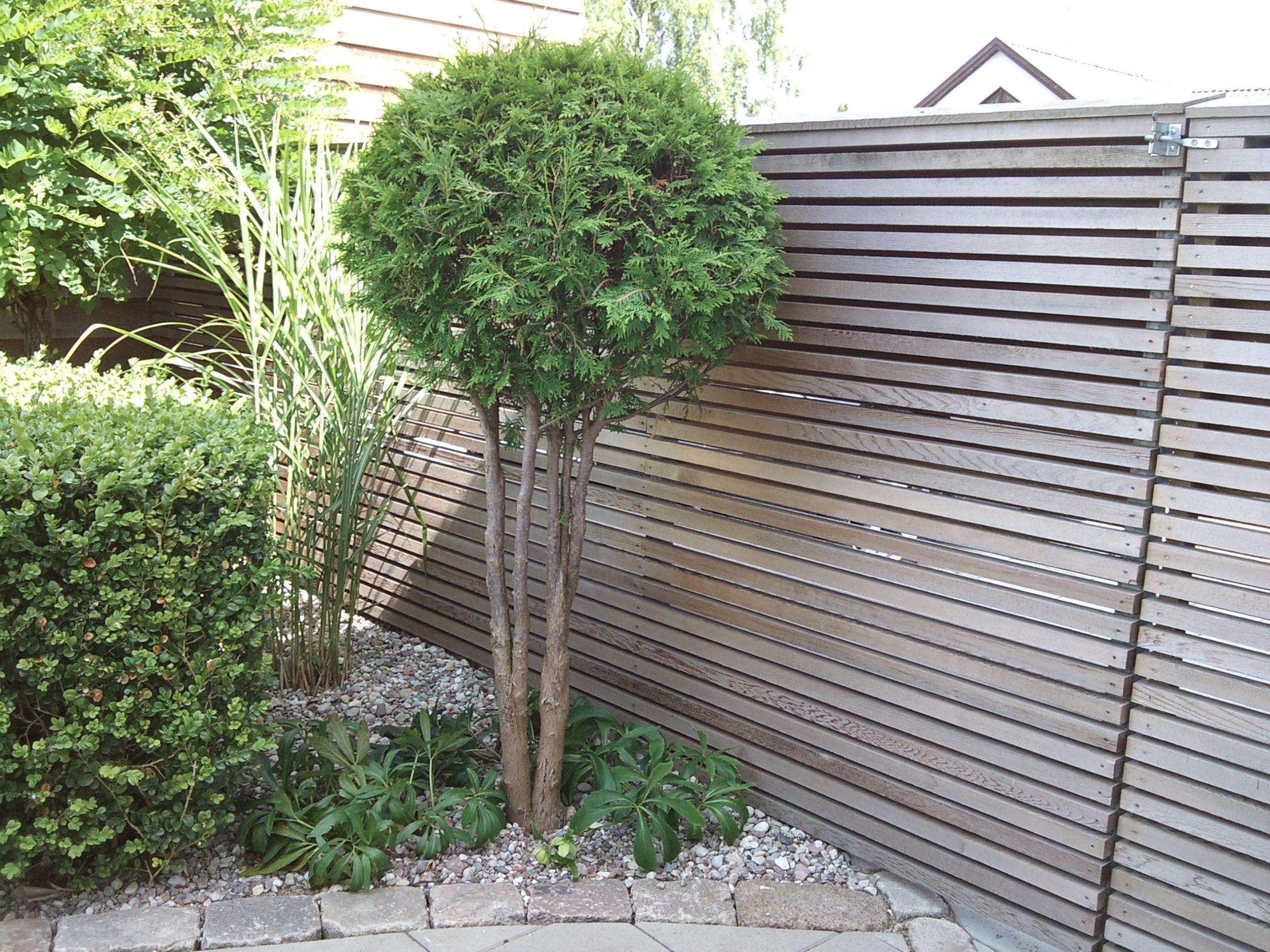 cederträ grånad avskärmning trädgård